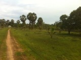 Land for sale in Srilanka