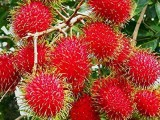 Rambutan Bulk For Sale