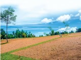 Kalutara Serupita Land For Sale